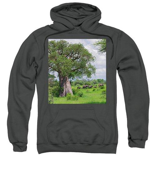 Elephants Walking Past Large Baobob Sweatshirt