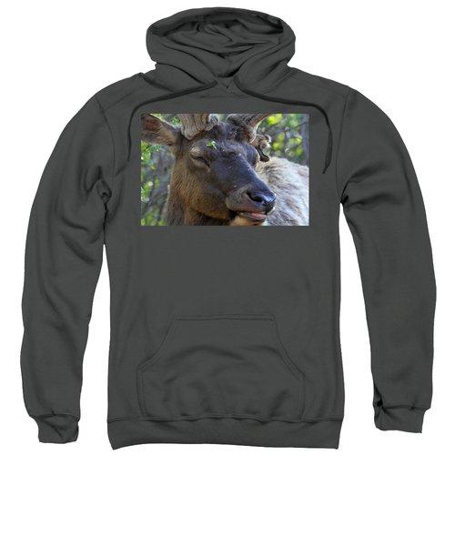 Elk Chuckle Sweatshirt