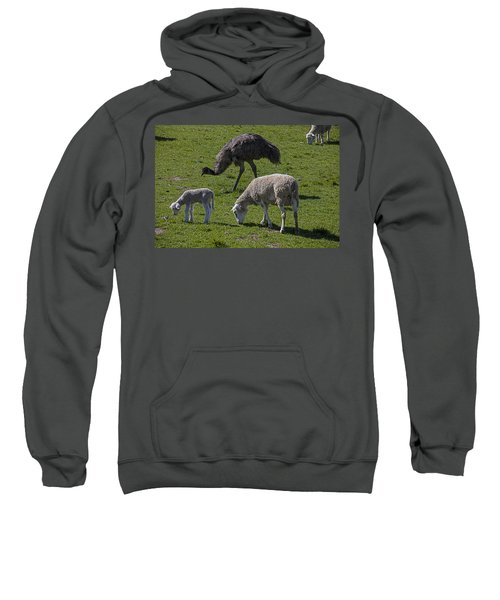 Emu And Sheep Sweatshirt by Garry Gay