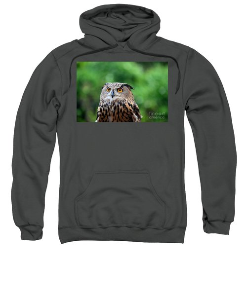 Eurasian Or European Eagle Owl Bubo Bubo Stares Intently Sweatshirt