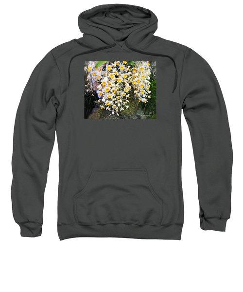 Exotic Aerides Sweatshirt