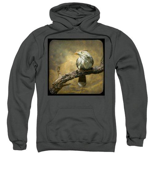 Exotic Bird - Guira Cuckoo Bird Sweatshirt