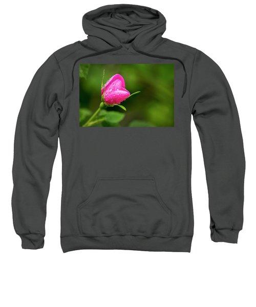 Extreme Close Up Of A Wild Rose Bud Sweatshirt