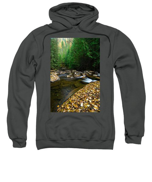 Fallen Autumn Color Leaves And Forest Sweatshirt