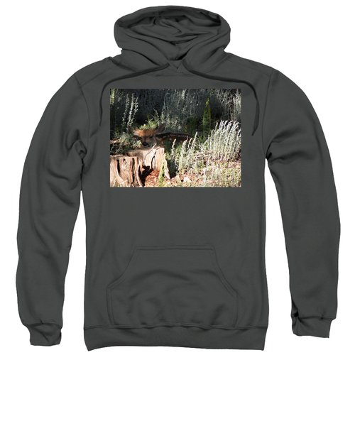 Fawn Front Yard Divide Co Sweatshirt