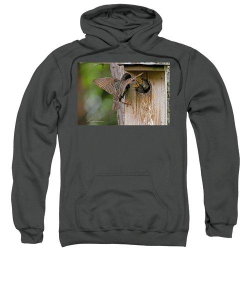 Feeding Starlings Sweatshirt by Torbjorn Swenelius