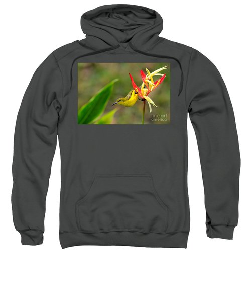Female Olive Backed Sunbird Clings To Heliconia Plant Flower Singapore Sweatshirt