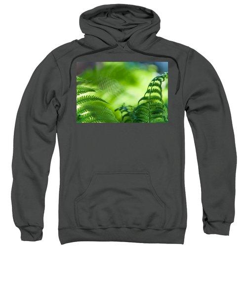 Fern Leaves. Healing Art Sweatshirt