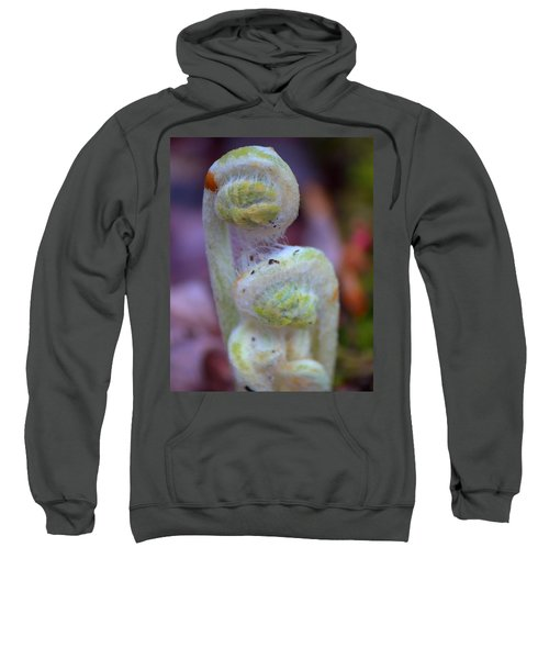 Fiddlehead Fern Sweatshirt