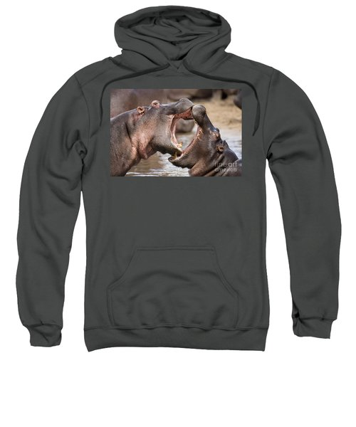 Fighting Hippos Sweatshirt by Richard Garvey-Williams