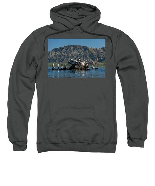 Flock Of Brown Pelican Pelecanus Sweatshirt