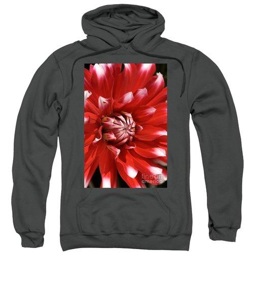 Flower- Dahlia-red-white Sweatshirt