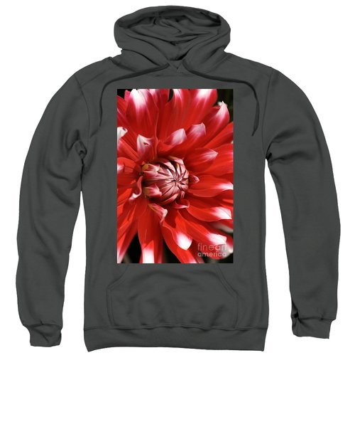 Flower- Dahlia-red-white Sweatshirt