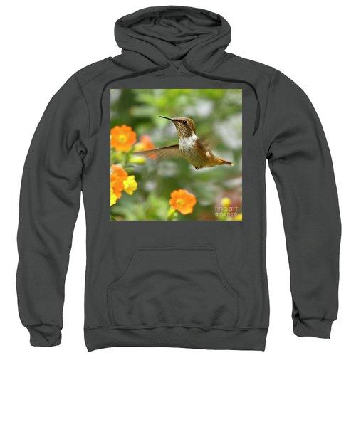 Flying Scintillant Hummingbird Sweatshirt
