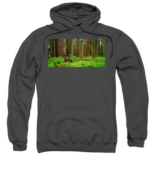 Forest Floor Olympic National Park Wa Sweatshirt