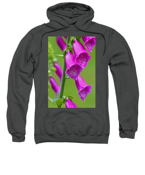 Foxglove Digitalis Purpurea Sweatshirt