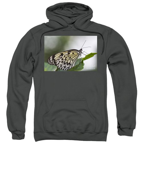 Fragile Beauty Sweatshirt