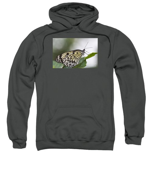 Fragile Beauty Sweatshirt