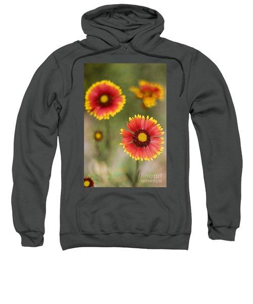 Gaillardia 'arizona Sun' Sweatshirt