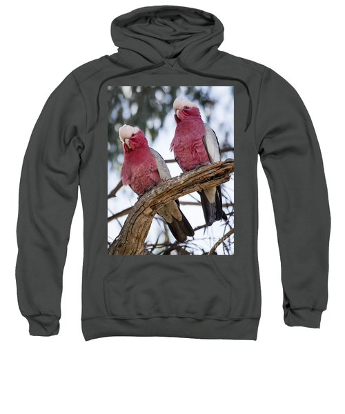 Galahs Sweatshirt