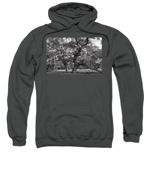Gnarly Tree  Sweatshirt