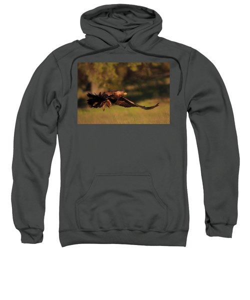 Golden Eagle On The Hunt Sweatshirt