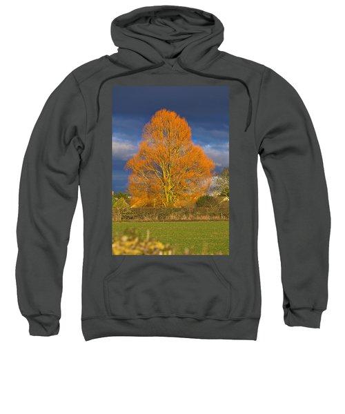 Golden Glow - Sunlit Tree Sweatshirt