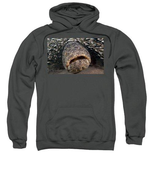 Goliath Grouper Sweatshirt