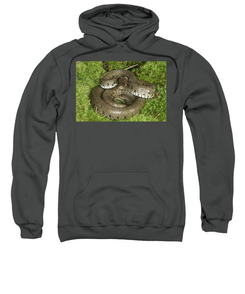 Grass Or Ringed Snake Sweatshirt