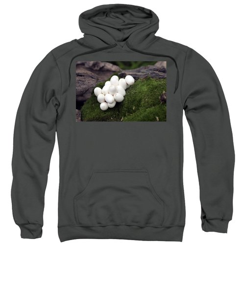 Grass Snake Eggs Sweatshirt