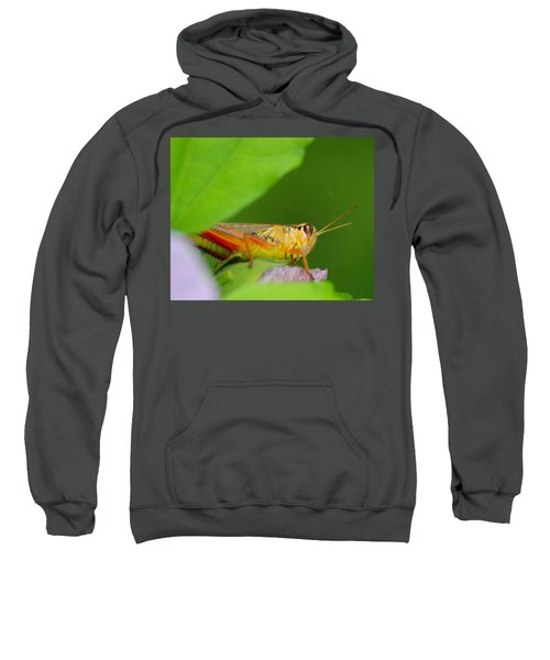 Grasshopper Sweatshirt