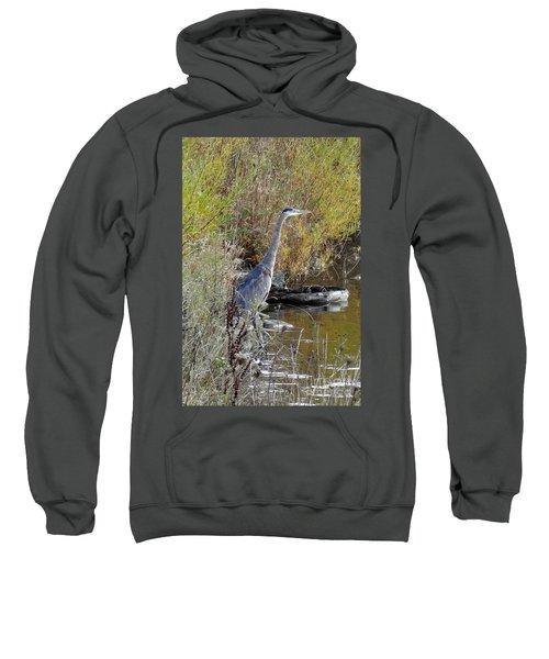 Great Blue Heron - Juvenile Sweatshirt