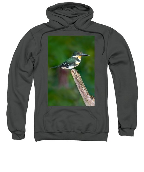 Green Kingfisher Chloroceryle Sweatshirt by Panoramic Images