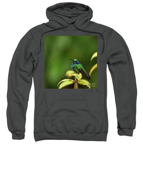 Green Violetear Hummingbird Sweatshirt