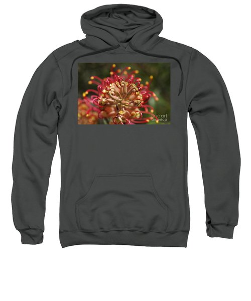 Grevillea Superb Australian Flora Sweatshirt