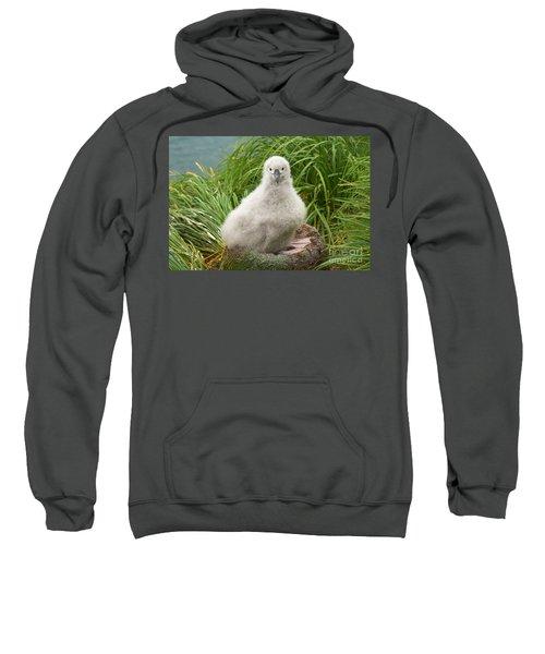 Grey-headed Albatross Chick Sweatshirt