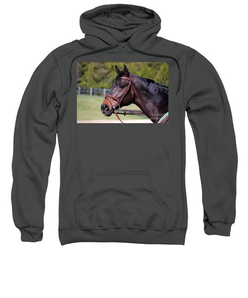 Handsome Gelding Sweatshirt