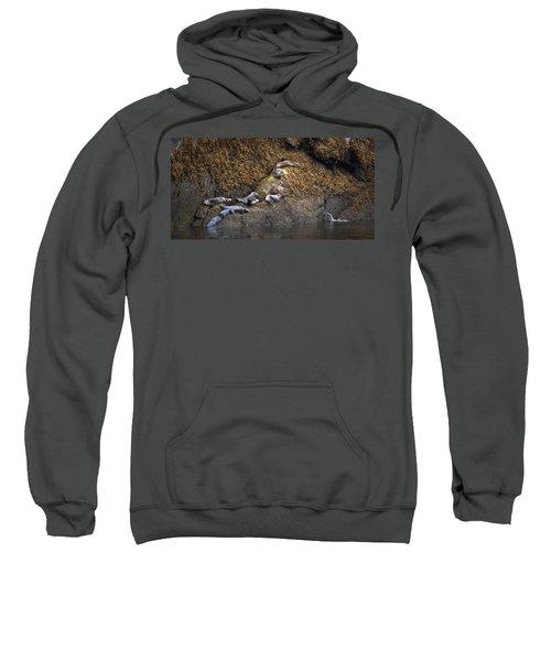 Harbor Seals Sweatshirt