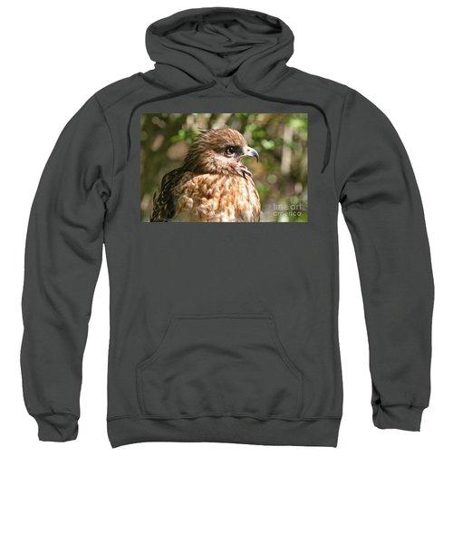 Hawk With An Attitude Sweatshirt