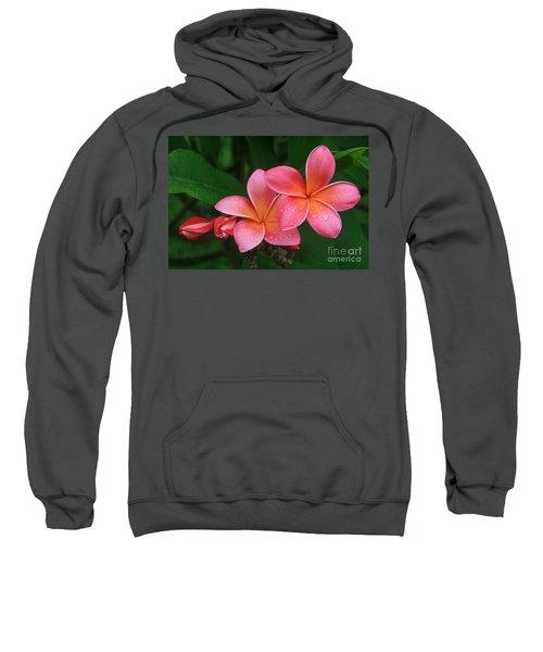 He Pua Laha Ole Hau Oli Hau Oli Oli Pua Melia Hae Maui Hawaii Tropical Plumeria Sweatshirt