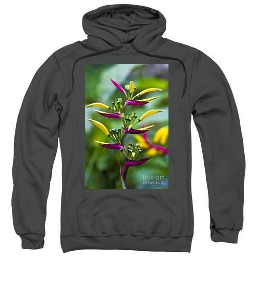 Heliconia Subulata II Sweatshirt