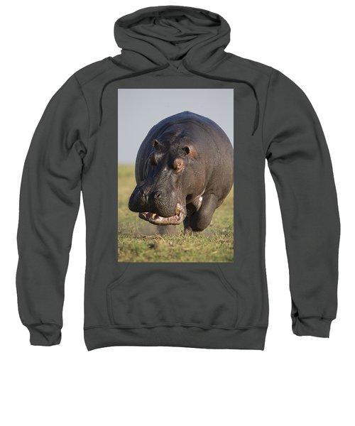 Hippopotamus Bull Charging Botswana Sweatshirt by Vincent Grafhorst