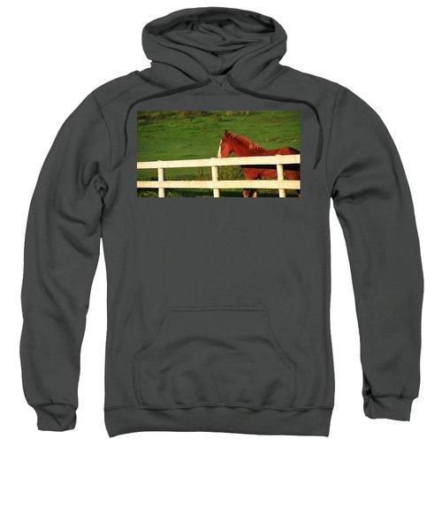 Horse And White Fence Sweatshirt
