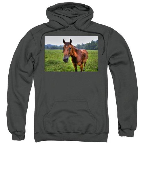 Horse In A Field Sweatshirt by Jonny D