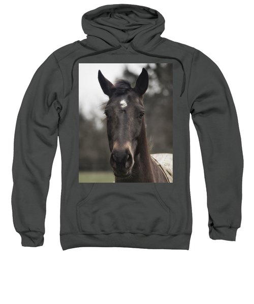 Horse With Gentle Eyes Sweatshirt