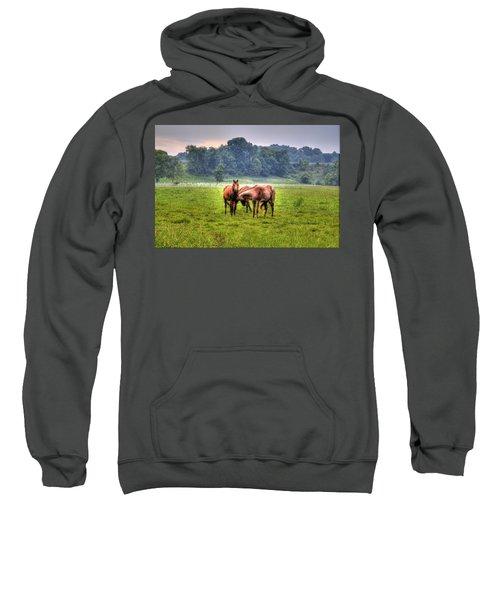 Horses Socialize Sweatshirt by Jonny D