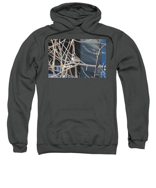 House Sparrow Sweatshirt