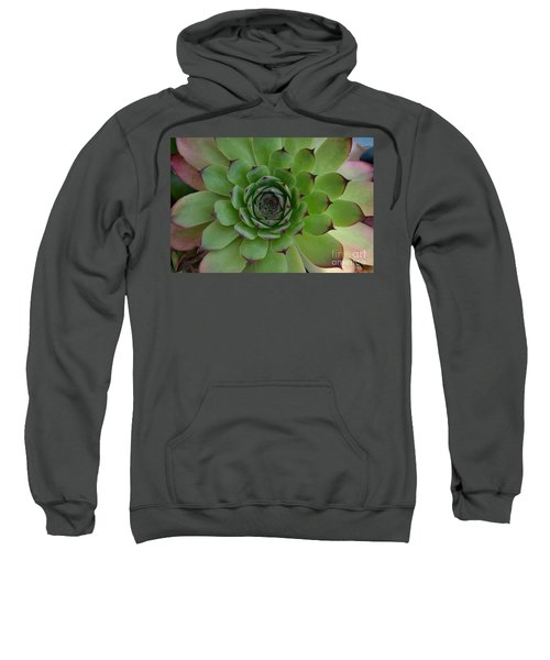 Houseleek Sempervivum Sweatshirt