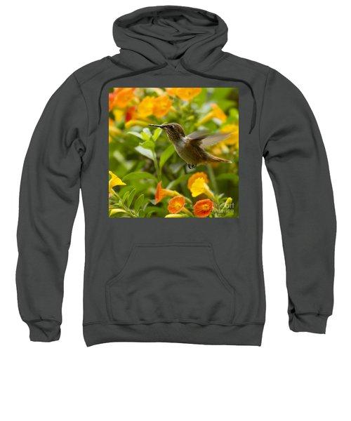 Hummingbird Looking For Food Sweatshirt