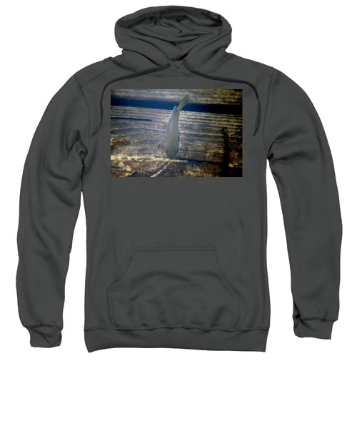 Sweatshirt featuring the photograph Hunting Minnows by Kim Pate